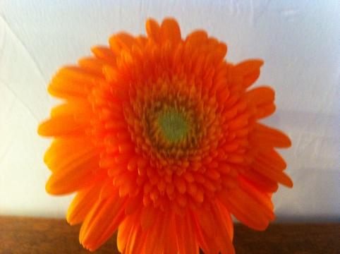 20120720-010227.jpg