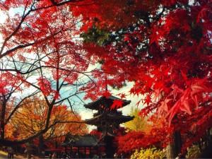 11/14-11/15  京都紅葉リトリート in ハイアットリージェンシー